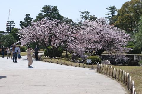 Kyoto2104009.jpg