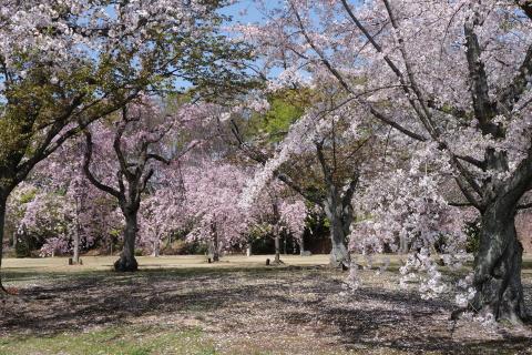 Kyoto2104014.jpg