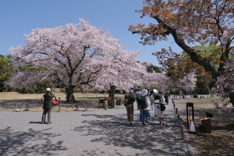 Kyoto2104015.jpg