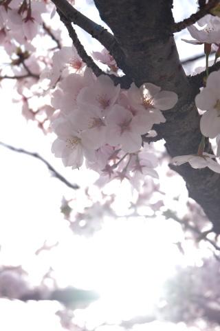 Kyoto2104062.jpg
