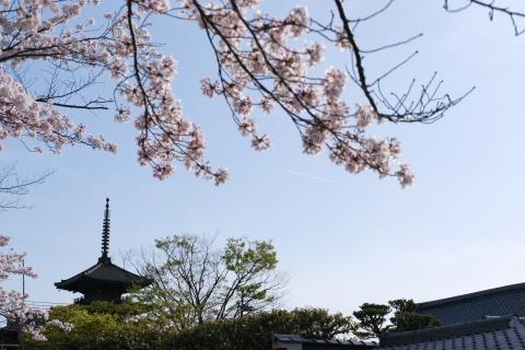 Kyoto2104063.jpg