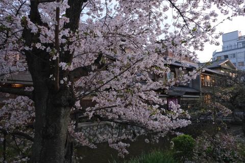 Kyoto2104067.jpg